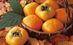 秋の食品 日替りセール